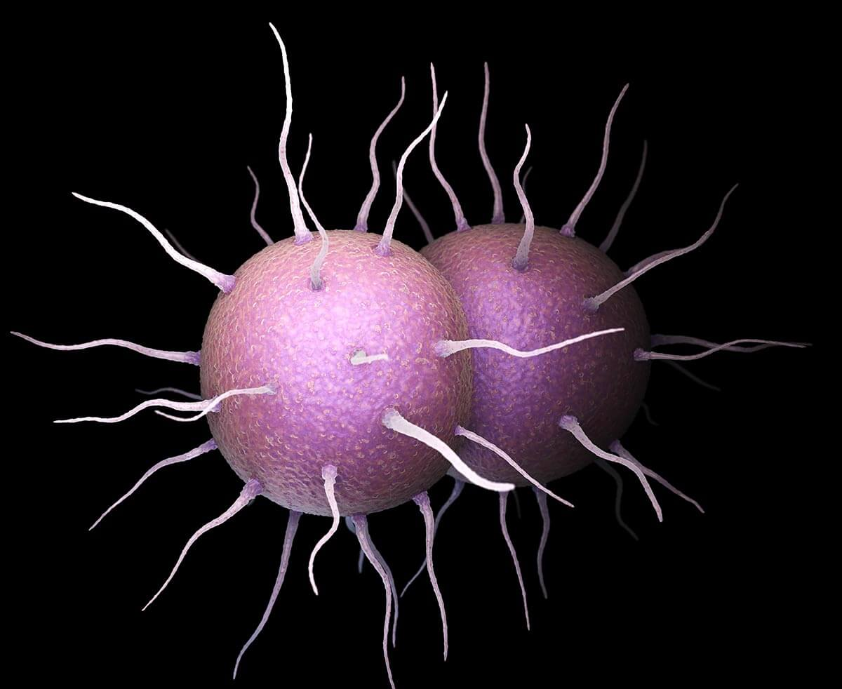 gonorrhea, reproductive health, family planning, sexually transmitted infection, sti